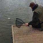 Kingfisher Trout Lake Bromyard