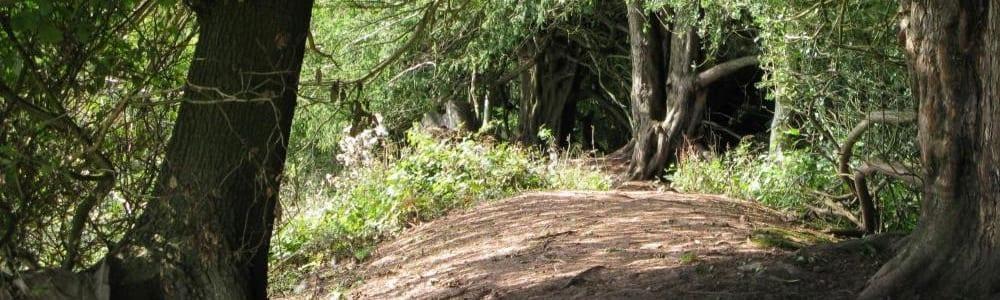 Credenhill Park Woods