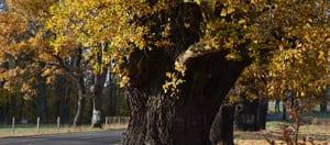 Plan November In Herefordshire