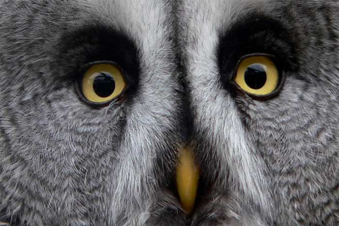 August Bank Holiday Wildlife Parks Herefordshire
