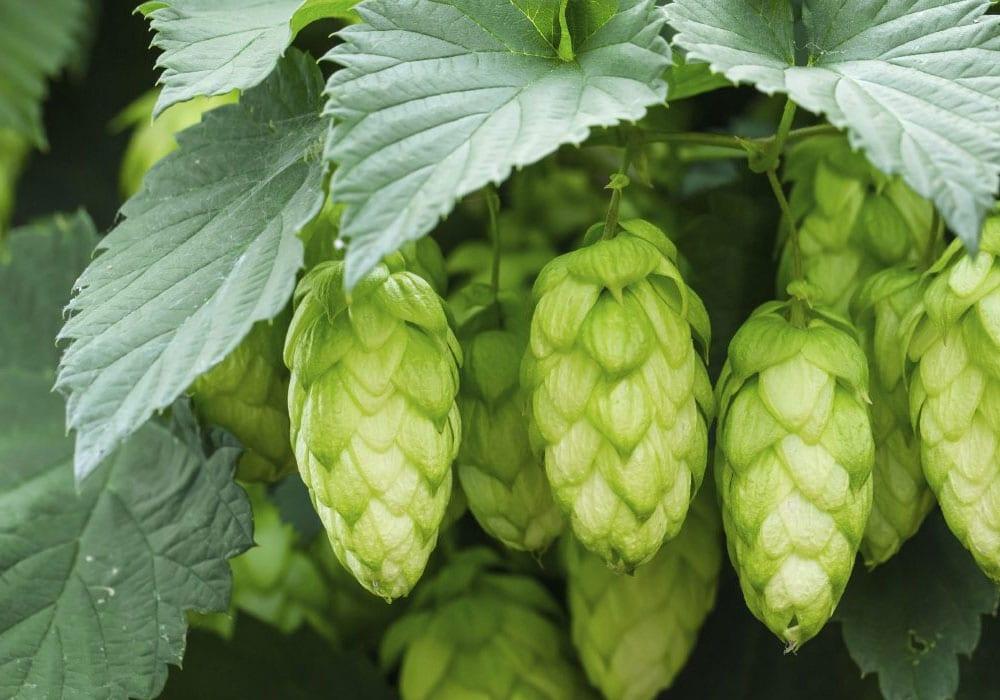 Wye Valley Brewery Hereford