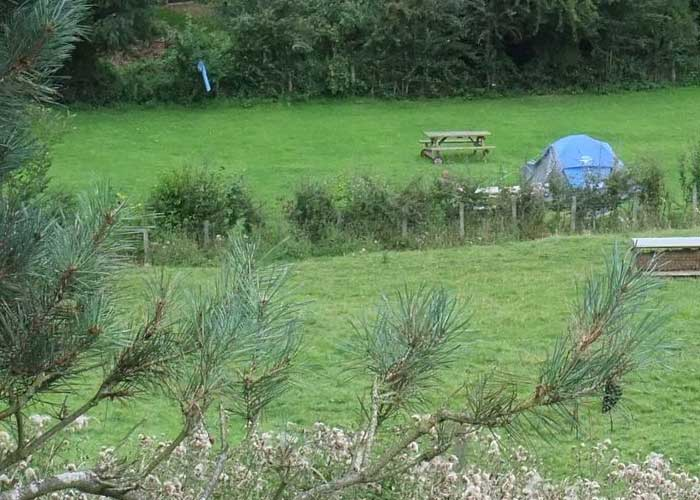 Buzzards Camping