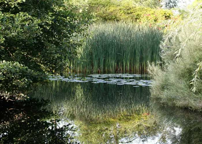 Westonbury Mill Water Garden