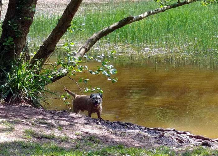 Haywood Dog Friendly Campsites In Herefordshire