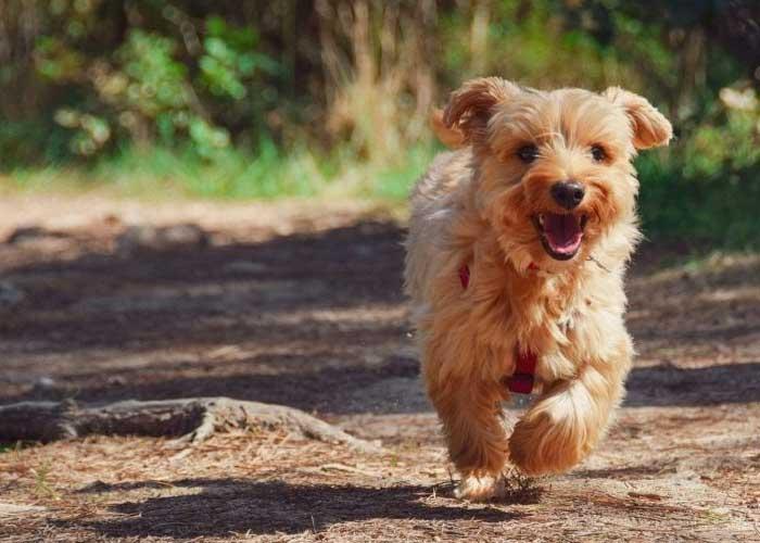 Trippenkennett Dog Friendly Campsites In Herefordshire