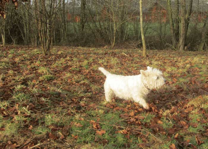 Woodside Dog Friendly Campsites In Herefordshire