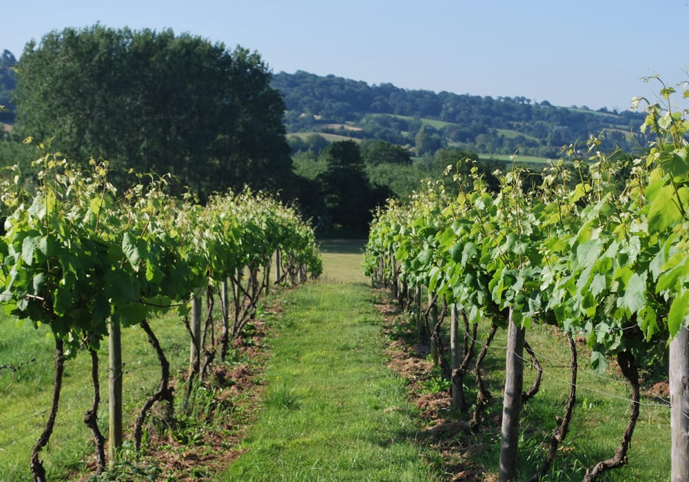 Frome Valley Vineyard Worcester