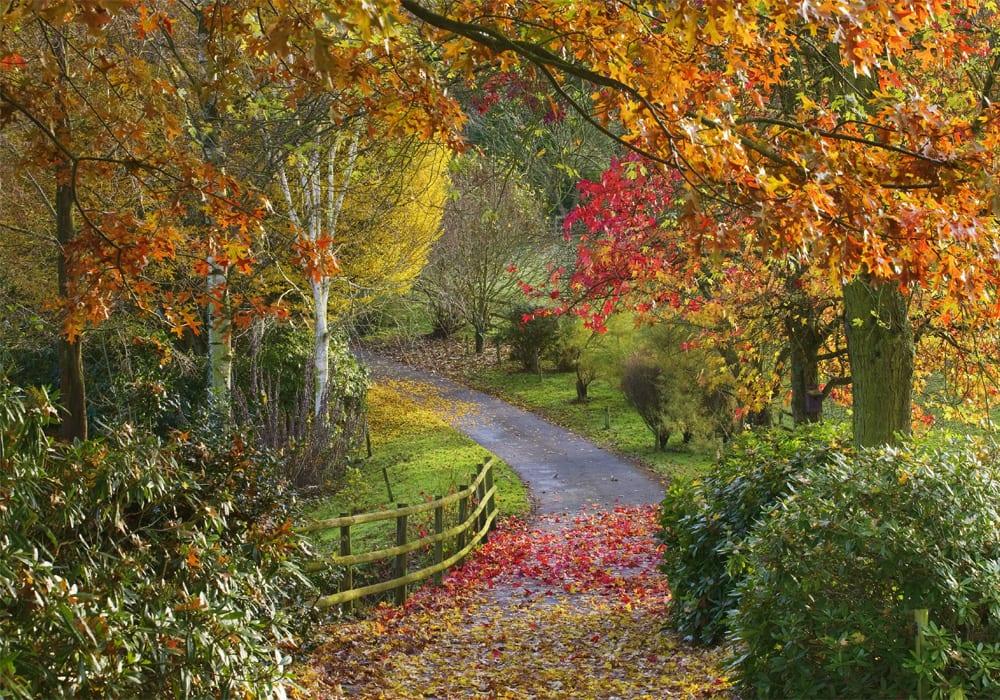 Bodenham Arboretum Kidderminster