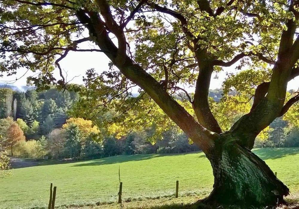 Bodenham Arboretum Worcestershire