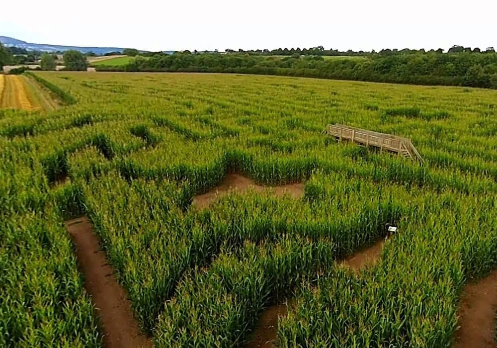 Churchfields Farm Maize Maze Worcestershire