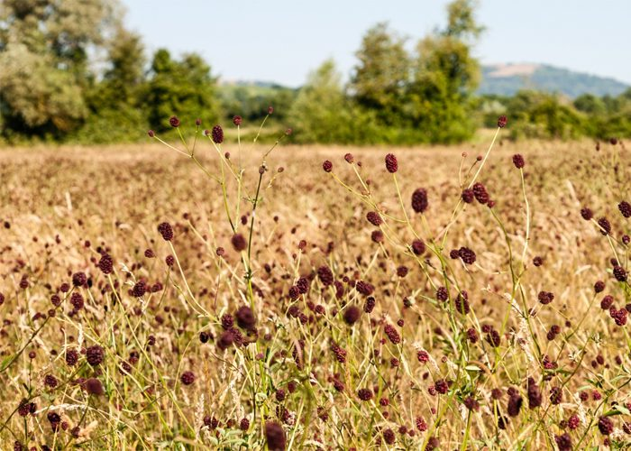 Meadows Of The Malver Chase