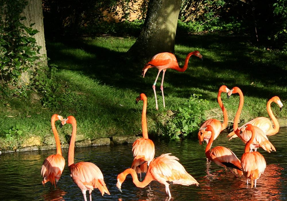 Things To Do In The Midlands, Birdland Park And Gardens Gloucestershire